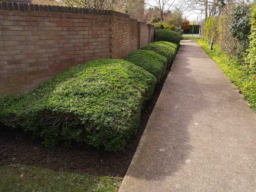 Residential grounds maintenance in New ash green