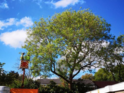 Tree surgery in New Ash Green, Kent
